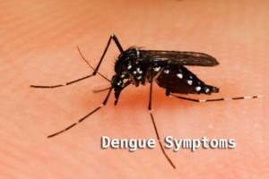 डेंगू के लक्षण हिंदी में