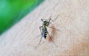 मच्छर के काटने से होने वाली जानलेवा बीमारी