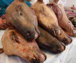 अवैध बुचड़खाने गौ हत्या गाय का कटना रुकना चाहिए